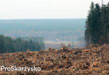 Obwodnica Skarżyska wycinka drzew